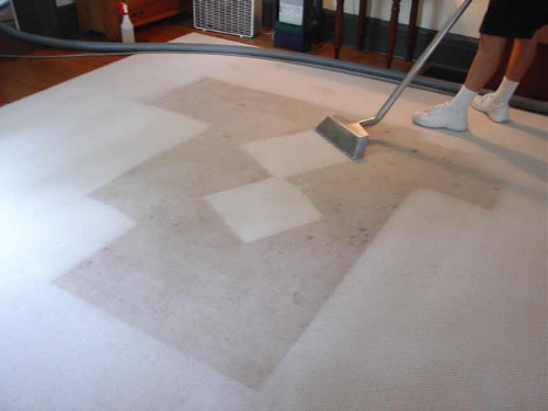 Carpet Steam Cleaner at Work in Niddrie