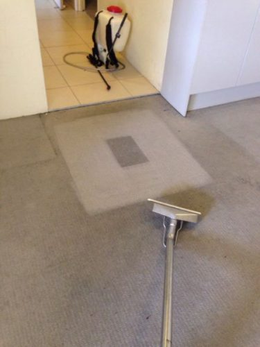 our carpet steam cleaners are the best u0026 are available for one off regular carpet cleaning off season and spring clean pre u0026 post party carpet steam