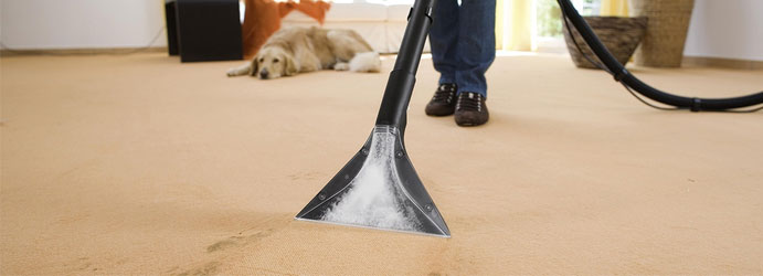 professional carpet cleaning Acton