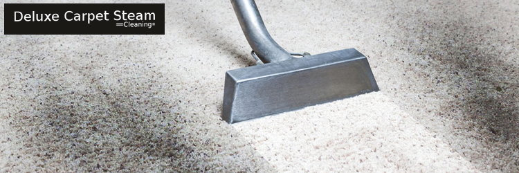 Carpet Mould Treatment