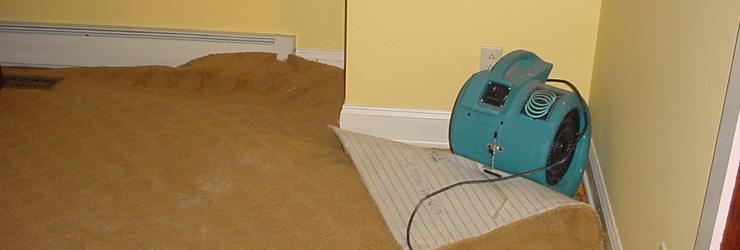 Carpet Is Damaged