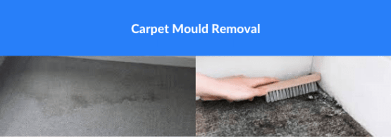 Carpet Mould Removal Mount Clear